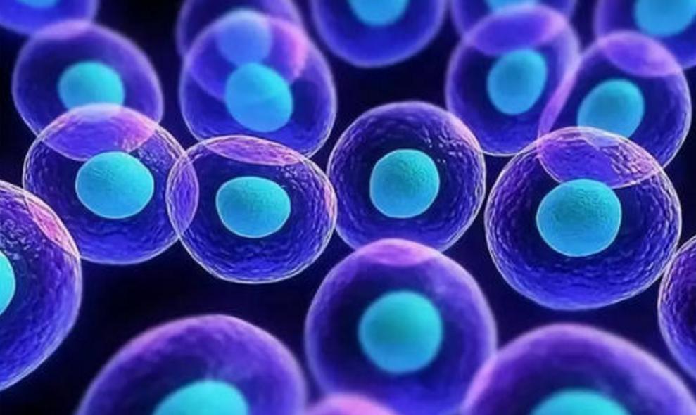 打造干细胞全球生态圈 促进粤港澳